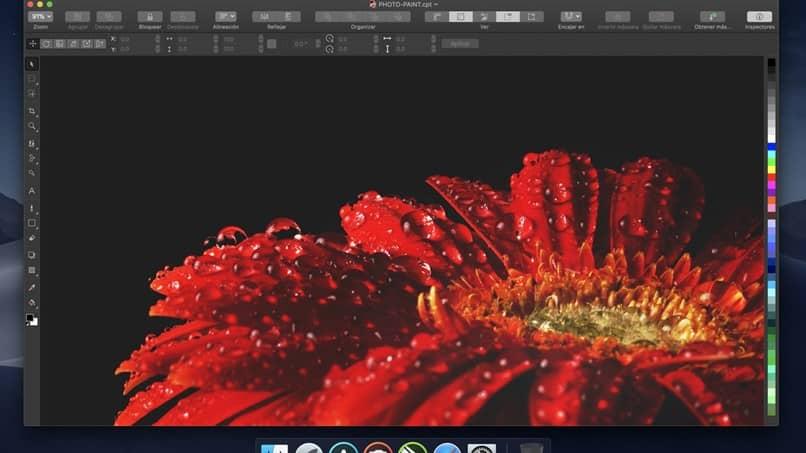 editor di gocce di fiori