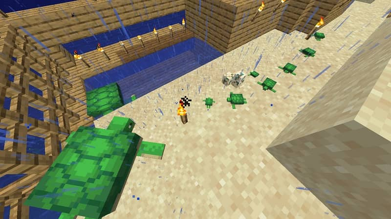 Hacer que abran los huevos de tortuga en Minecraft