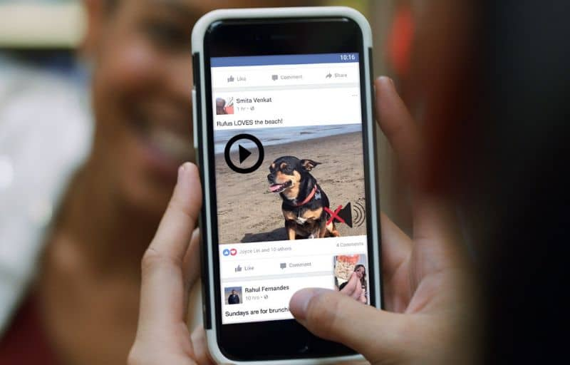 Dog Facebook Video