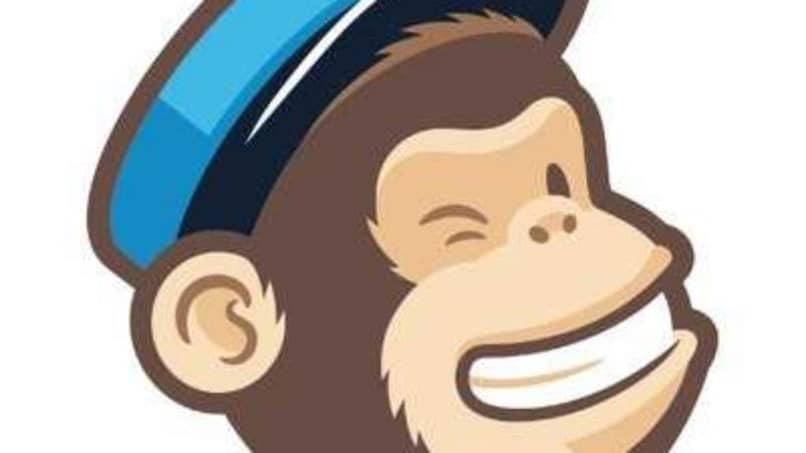 mono guino ojo
